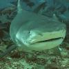 Marine predators Hidden objects