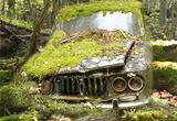 Abandoned Forest Treasure Escape FirstEscapeGames