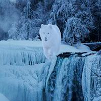 Alaskan Winter Forest Escape WowEscape