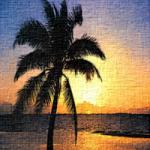 Amajeto Tropic