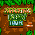 Amazing Forest Escape Play9Games