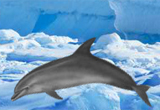 Antarctic Dolphin Escape FirstEscapeGames