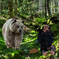 Bavarian Forest Escape Games2Rule
