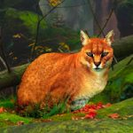 Big African Golden Cat Escape BigEscapeGames