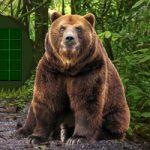 Big Bear Land Escape BigEscapeGames