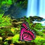 Big Butterfly Land Escape BigEscapeGames