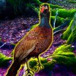 Big Pheasant Forest Escape BigEscapeGames