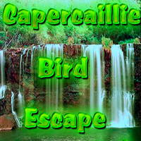 Capercaillie Bird Escape WowEscape