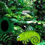 Chameleon Rain Forest Escape Games2Rule