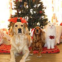 Christmas Pets Puzzle OceanDesJeux