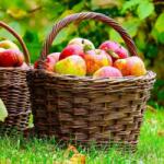 Country Fruits Farm Escape Games2Rule