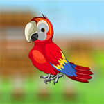 Cute Parrot Escape AvmGames