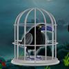 Dark Fantasy Crow Escape WowEscape