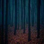 Dark Forest Fun Escape FunEscapeGames
