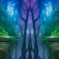 Dense Forest Escape ZoooGames