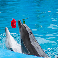 Dolphin In Love Jigsaw Puzzle OceanDesJeux