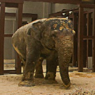 Elephant Escape From Shed EscapeGamesZone