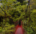 Escape From Monteverde Cloud Forest Reserve EightGames