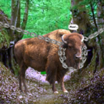 Escape Game Save The Country Bull WowEscape
