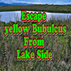 Escape Yellow Bubulcus From Lake Side Escape Games New