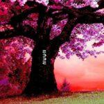 Fantasy Pink Forest Escape WowEscape