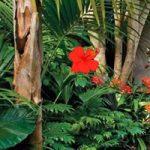 Find The Colorful Garden Bird BigEscapeGames