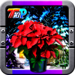 Find The New Year Poinsettia Top10NewGames