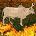 Fire Forest Bull Escape WowEscape