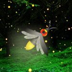 Fireflies Night Forest Escape Games2Rule