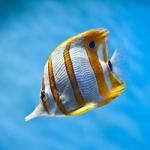 Fish Swap Escape Amajeto