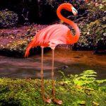 Flamingo Forest Escape WowEscape