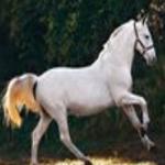 Foal Escape 8BGames