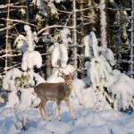 Frozen Forest Escape LolEscape