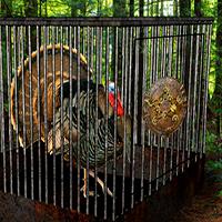 Ghost Town Turkey Escape YolkGames