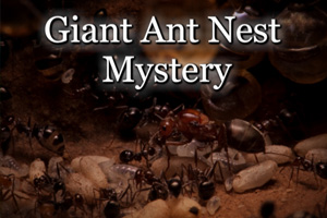 Giant Ant Nest Mystery CrazyEscapeGames