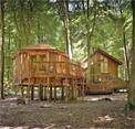 Golden Oak Tree House Escape EightGames