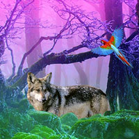 Gray Wolf Forest Escape WowEscape