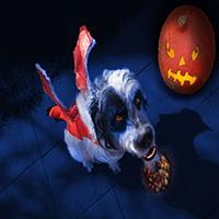 Halloween Dog Jigsaw Puzzle OceanDesJeux