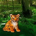 Help The Lonely Tiger Cub WowEscape