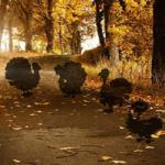 Hidden Thanksgiving Turkey HiddenOGames