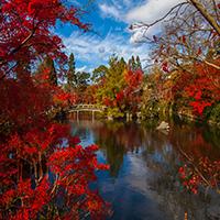 Japanese Autumn Puzzle OceanDesJeux