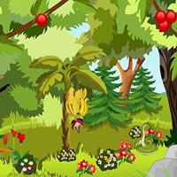 Jungle Forest Escape TollFreeGames