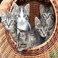 Kittens Jigsaw Puzzle Oceandesjeux