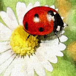 Ladybugs Room Amajeto