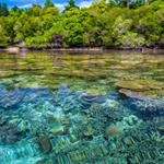 Les Recifs Coralliens Puzzle OceanDesJeux