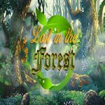 Lost In The Forest Hidden247