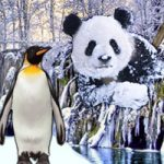 Magical Snow Animal Escape WowEscape