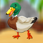 Mallard Duck Escape AvmGames