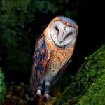 Masked Owl Island Escape WowEscape