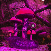 Midnight Purple Forest Secrets Games2Rule